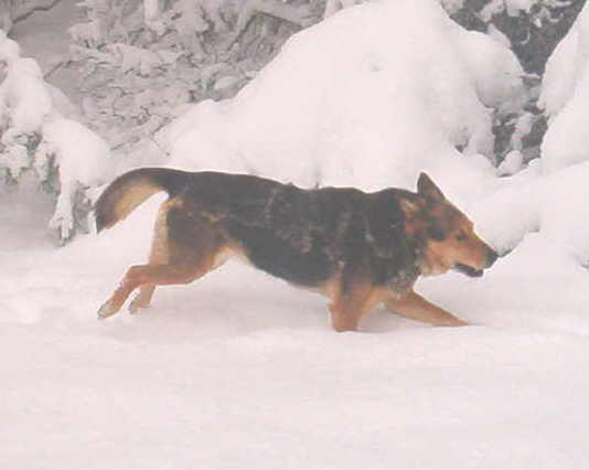 bandit-in-the-snow-3-2-09-14