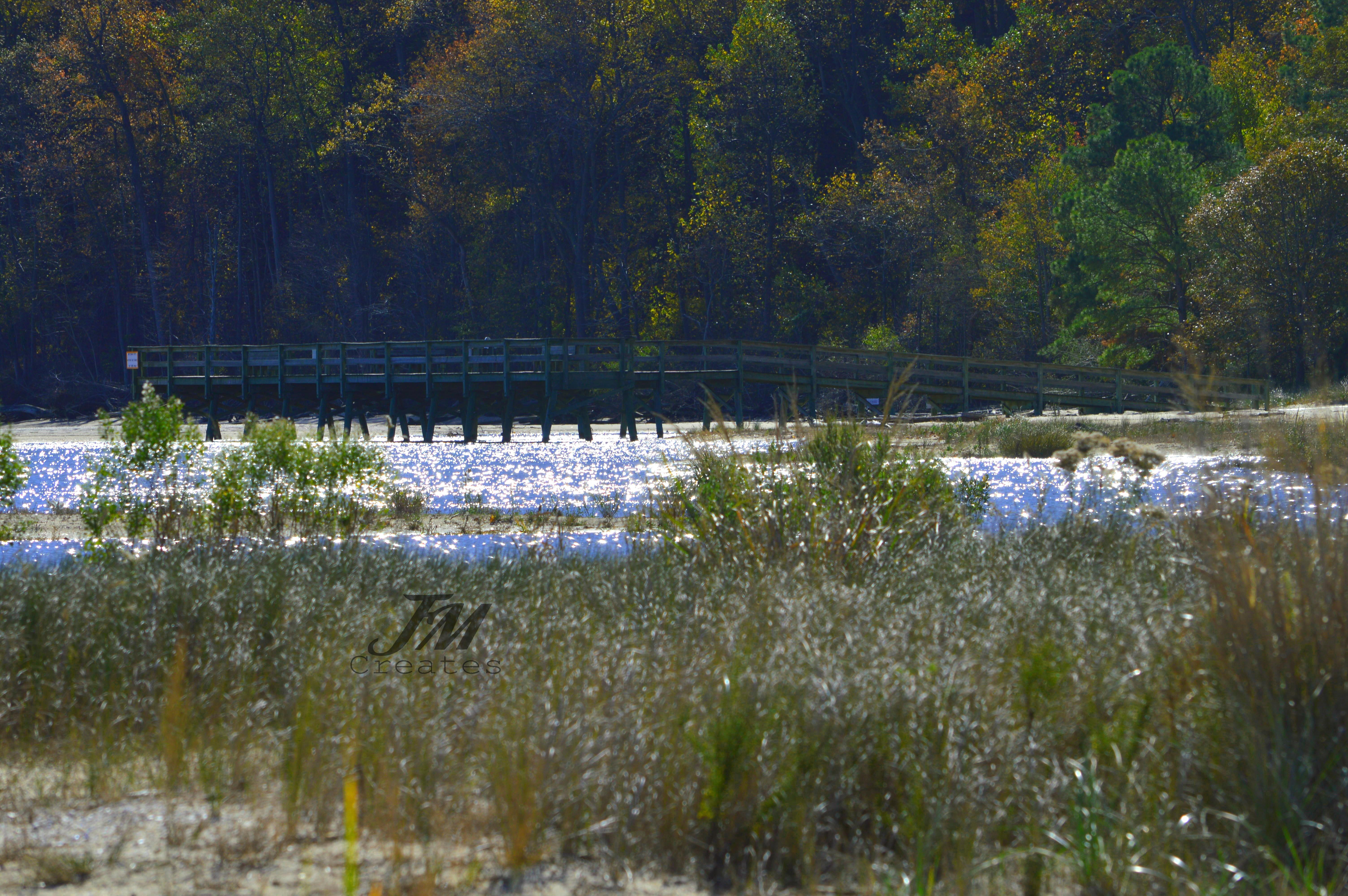 Flag Ponds Nature Park 4 CEWM